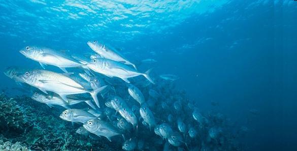 Recirculating Aquaculture Systems - RAS